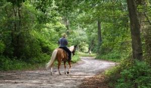 Blue Spark Event Design - Horse back Riding